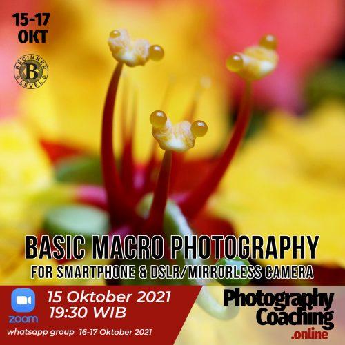 Basic Macro Photography Smartphone dslr mirrorless camera